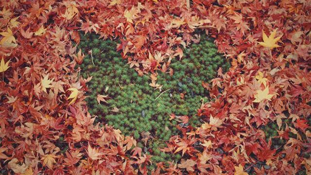 落ち葉でできたハート