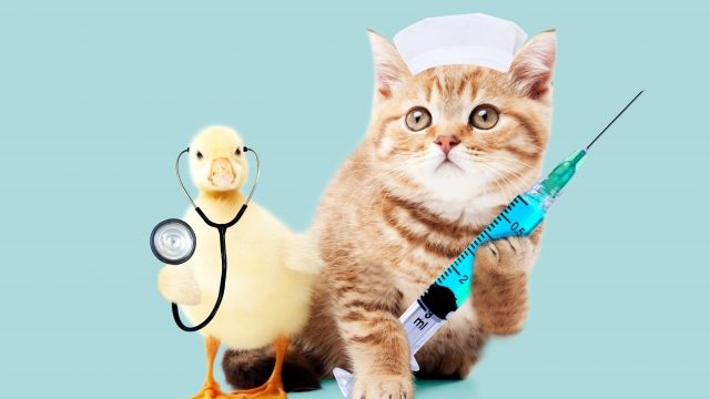 ネコとヒヨコのお医者さん